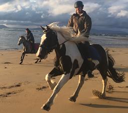 Balade de 1h30 sur la plage à Island View Riding Stable