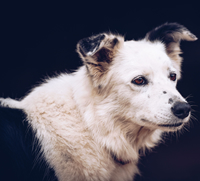 Collie dog at Island View Riding Stables